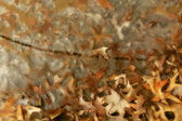 Gekraakte ijs met bladeren — Foto de Stock