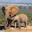 Elephant Mother and Baby — Stock Photo
