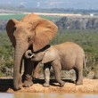 Elephant Mother and Baby — Stock Photo #2273456
