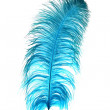 Blue Ostrich Feather — Stock Photo