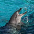 Playful Dolphin — Stock Photo