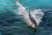 Dolphin Swimming — Stock Photo