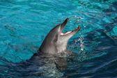 Playful Dolphin — Stock Photo