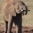 Stock Photo: AfricElephant at Waterhole