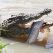 Crocodile and Fish — Stock Photo #2308961
