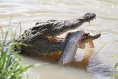 Crocodile and Fish — Stock Photo