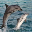 Dolphin Bow Jump — Stock Photo