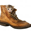Kitten in Boot — Stock Photo #2319939