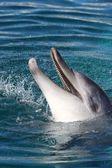 Dolphin Portrait — Stock Photo