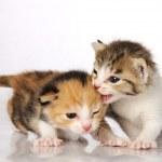 Kitten Friends — Stock Photo