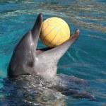 Dolphin hrát s míčem — Stock fotografie