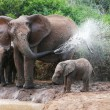 Elephant Spraying Water — Stock Photo