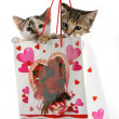 Kittens in Bag — Stock Photo #2415074