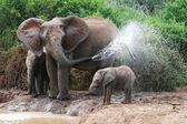 Elephant Spraying Water — Stockfoto