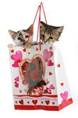 Kittens in a Bag — Stock Photo