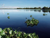 Pantanal Lake — Stock Photo