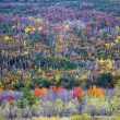 Fall foliage colors — Foto Stock