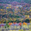 Fall foliage colors - Stock Photo