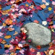 Fall foliage colors - Stok fotoraf