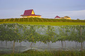Winery at sunset — Stock Photo