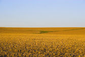 Countryside surrounded by colorful fields and meadows — Photo