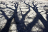 Shadow of tree on the pavement — Stock Photo