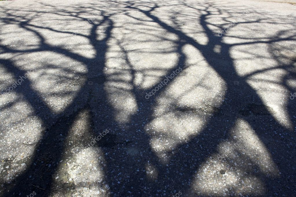Shadow of tree on the pavement — Stock Photo #2279620