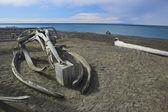 鲸鱼骨头 — 图库照片