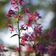 Macro pink wild flowers - Stock Photo