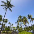 Palm grove — Stock Photo