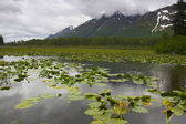 Alaska wetland — Stock Photo
