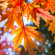 Stock Photo: Fall background
