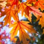 fond d'automne — Photo