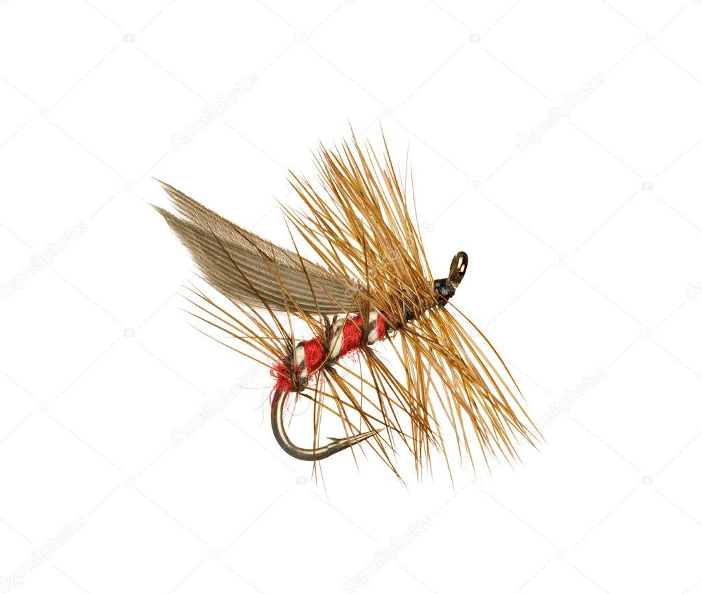 Dry Trout Fishing Fly Isolated on White Background  — Stock Photo #2271987