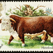 British Cattle Postage Stamp — Stock Photo #2396711