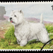 British Dog Postage Stamp — Stock Photo #2396734