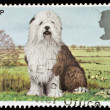 British Dog Postage Stamp — Stock Photo #2396753