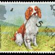 Stock Photo: British Dog Postage Stamp