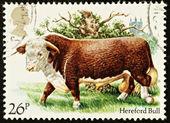British Cattle Postage Stamp — Stock Photo