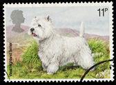 British Dog Postage Stamp — Stock Photo