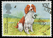 British Dog Postage Stamp — Stock Photo
