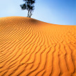 Lonely tree in sandy desert. - Stock Photo