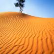 Lonely tree in sandy desert. — Stock Photo