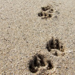 Stockfoto: Paw Prints