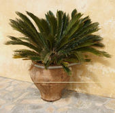 Palm Tree Pot — Stock Photo