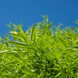 Bright blue sky and green tree — Stock Photo