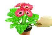 Flower-growing — Stock Photo