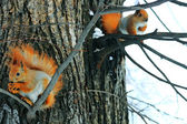 Red Squirrel On The Tree — Stock Photo