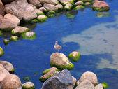 Crimea meer landschaft mit möwe — Stockfoto
