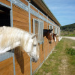 Horses in stall — Stock Photo